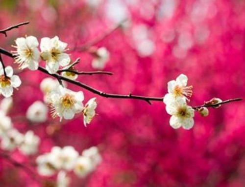 Le Printemps, lié à l'élément Bois et à l'organe Foie, évoque la montée de sève, l'apparition des bourgeons… un renouveau…