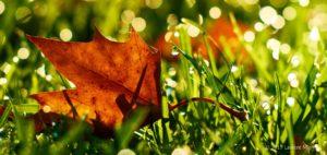 L'automne saison du Poumon