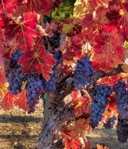 L'automne saison des récoltes