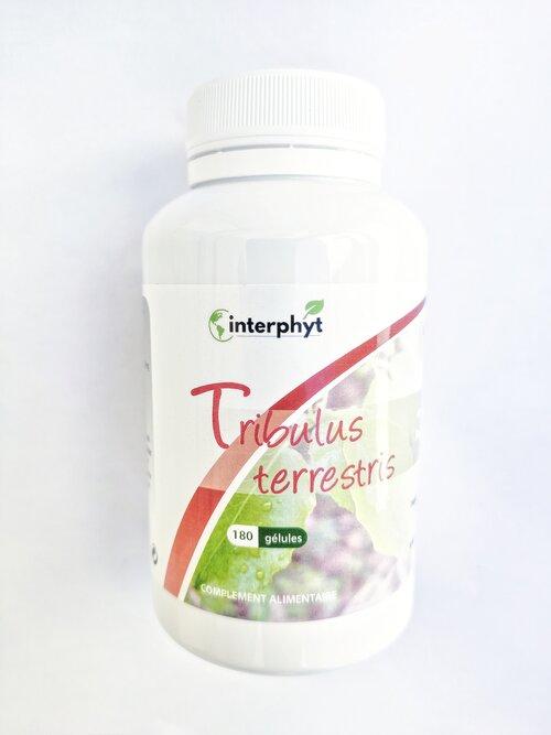 Tribulus terrestris Interphyt